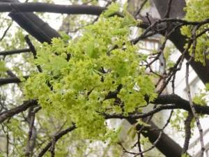 Май пословицы и поговорки, народные приметы весны