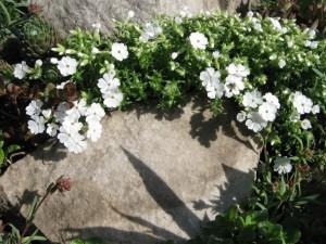 Весна на даче