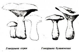 Грибы-4
