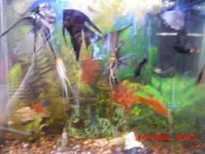 С чего начать разведение аквариумных рыбок