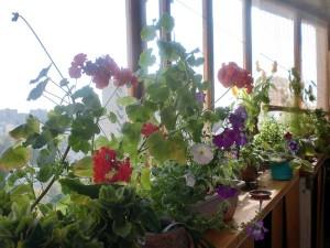 Цветник, огород, сад на балконе