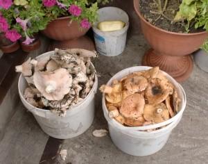 Соленые, маринованные, сушеные грибы